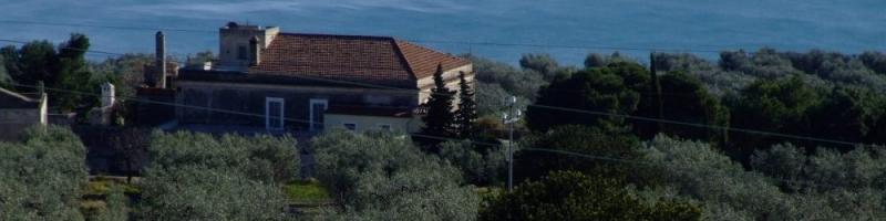 comprare olio di oliva italiano direttamente dal produttore