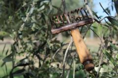 rastrello per raccolta olive