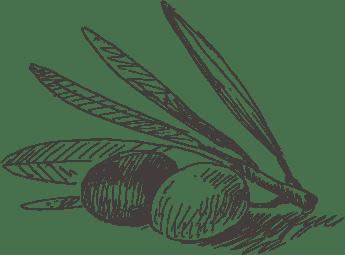 Contatti Masseria Papone per comprare olio di oliva
