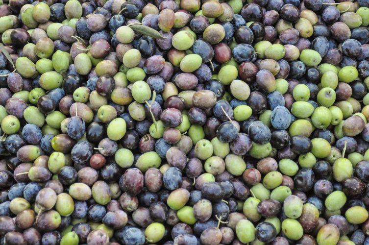 bomboniera olio di oliva