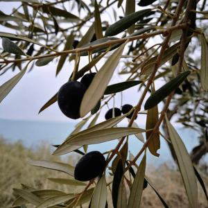 campagna olivicola 2018 2019